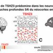 La délétion du gène TSHZ3 responsable d'un syndrome autistique