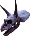Triceratops2.png