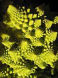 Le chou romanesco, un exemple de fractale naturelle