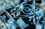 Un exemple de microalgues: les diatomées