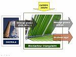 Principe de fonctionnement du bioréacteur à microalgues mis au point par la société américaine GreenFuel