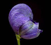 Profil de la fleur