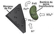 Schéma présentant la corrosion dans des conditions anaérobies provoquées par des bactéries du genre Desulfovibrio.