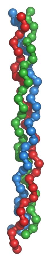 La triple hélice de collagène
