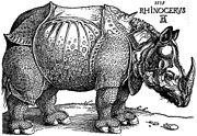 Une célèbre estampe sur bois, gravée par Albrecht Dürer en 1515, et appelée le Rhinocéros de Dürer