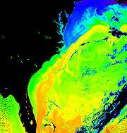 Le Gulf Stream (en orange et jaune) au large de la côte est des États-Unis (fausses couleurs)