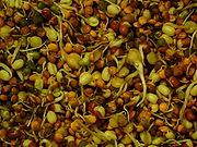 Mélange de graines en germination