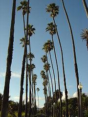 Les rues bordées de palmiers sont l'un des symboles de Los Angeles