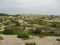 Un paysage sur Anholt.