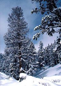 La neige fraîche, avec un albédo très élevé, paraît très blanche