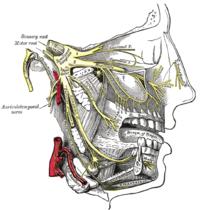 Le ganglion trigéminal et les branches du nerf trijumeau