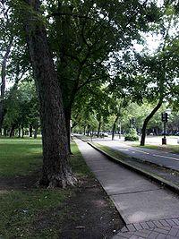 Piste cyclable du parc Lafontaine