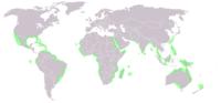 World map mangrove distribution.png