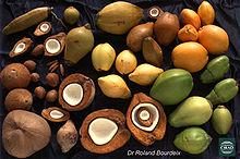 des noix de coco de couleurs et tailles variées