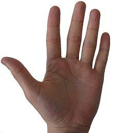 Photo de la paume d'une main gauche