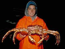 Une jeune femme tenant un crabe géant de couleur orangée devant elle
