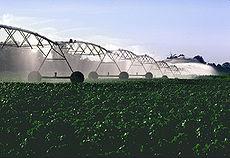 Irrigation du coton aux États-Unis
