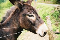 La clôture fonctionnelle des éleveurs est destinée à garder ou guider le bétail et certains animaux domestiques.