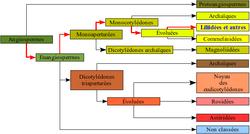 alt= Classification classique puis phylogénétique d'une plante à fleur, le Lis des Pyrénées. Lorsque la classification phylogénétique suit la classification classique, le nom du rang taxinomique (division, classe, ordre, famille, etc) ainsi que le nom du taxon (en latin) peuvent être gardés. Dans le cas contraire (comme les angiospermes) le rang est simplement appelé clade, un nouveau nom est donné, et la classification classique n'est plus suivie, elle peut néanmoins être de nouveau suivie à partir d'un rang inférieur.