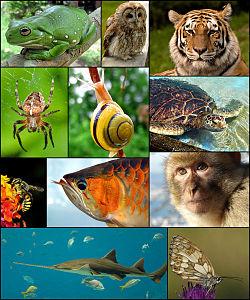 De gauche à droite et de haut en bas:Rainette de White - Chouette hulotte - Tigre- Épeire diadème - Escargot des jardins- Tortueverte - Anthidium florentinum - Scleropagesformosus - Macaque berbère- Pristis pectinata - Demi-deuil