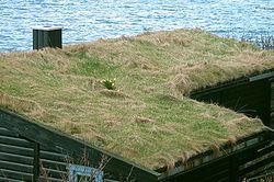 Graminées et touffe de jonquilles, à Bøur (îles Faroe,Islande)