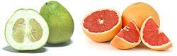 Citrus maxima et Citrus ×paradisi