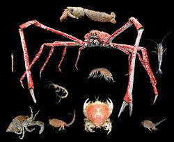 Exemples de crustacés