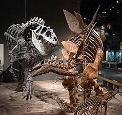 squelettes d'Allosaurus et de Stegosaurus auRoyal Ontario Museum