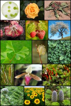Diversité des plantes