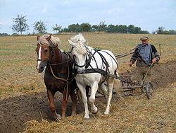 Labour traditionnel en Allemagne