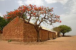 Un flamboyant (Delonix regia) en fleur contreun bâtiment en briques au Mali.