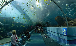 L'Aquarium de Géorgie, le plus grand du monde