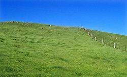 Un pré ou champ vert