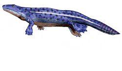 Un des plus anciens tétrapodes, Ichthyostega