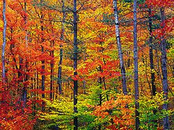 Couleurs d'automne du New Hampshire