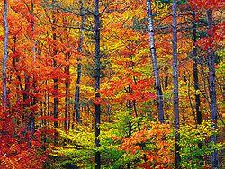 Couleurs d'automne du New Hampshire