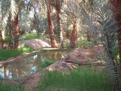 Oasis de Timimoun (Algérie)