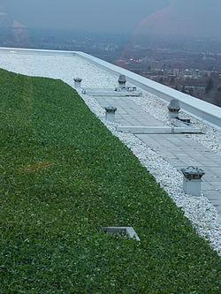 Toit vert (gazon et trèfle) des pavillons Lassonde de l'École Polytechnique de Montréal