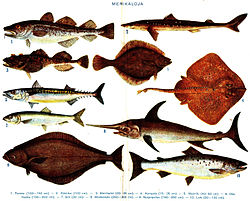 Exemples de poissons marins