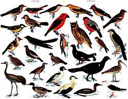 29 espèces différentes de Finlande