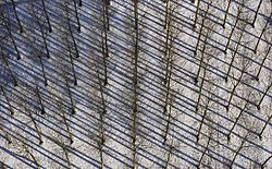 Vue aérienne d'une peupleraie enneigée
