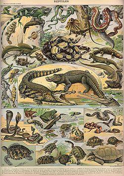Adolphe Millot, Nouveau Larousse Illustré,1897-1904