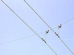 Lignes aériennes de contact de trolleybus.