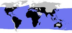 World.distribution.testudines.1.png
