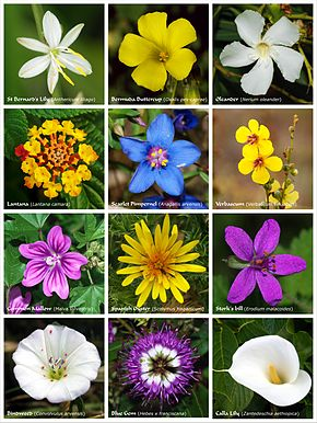Fleur introduction affiche prsentant diverses fleurs et inflorescences altavistaventures Image collections