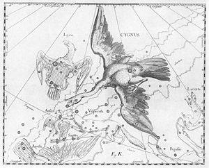 Cygnus.jpg