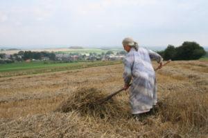 Agricultrice procédant au séchage de la paille.