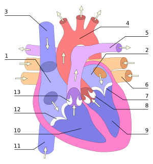 Heart numlabels.svg