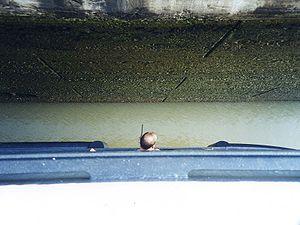 Un officer du paquebot Ryndam vérifie l'espace libre pendant un éclusage (l'image est vue d'en haut; le haut de l'image est le mur de l'écluse, le bas est la coque du navire).