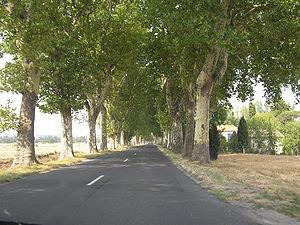 Aux XIXe et XXesiècles, les routes étaient souvent bordées d'alignements d'arbres. Ils tendent à disparaître (ici, route départementale du sud de la France).